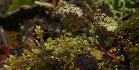 Lichen - 11.29.2009 - 10.57.45