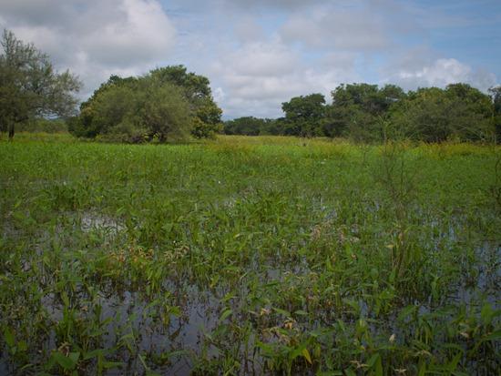 Lazaro Wetland - 07.07.2010 - 08.35.02