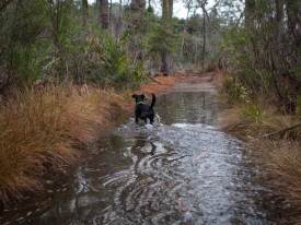 Skidaway Island with Amos - Flooded - 20121213 - 5