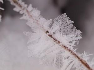 frozen-bog-1-19-2009-10-02-253