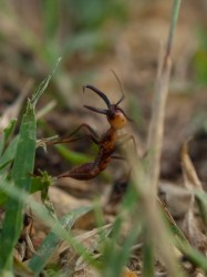 army-ant-invasion-at-catalina-wetland-05212009-165703