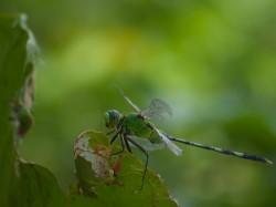 dragonfly-05152009-121139