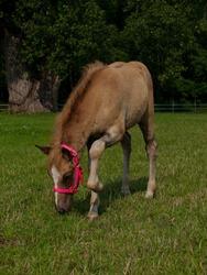 Horses - Coral - 07.25.2009 - 15.05.40