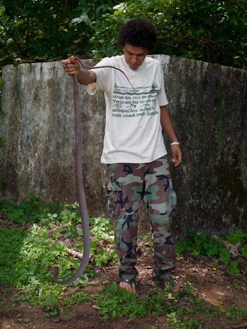 Neotropical Whipsnake - Colubridae - Coluber mentovarius - 06.28.2009 - 13.22.40