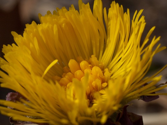 Spring Flowers - 04.02.2010 - 14.13.41