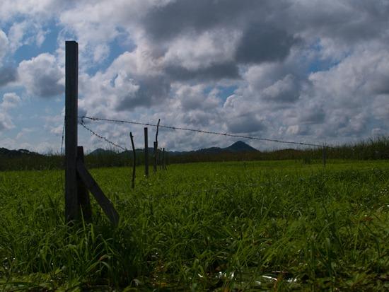 Wetland - 06.12.2010 - 08.49.26