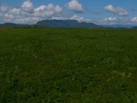 Wetland - 06.12.2010 - 08.50.07
