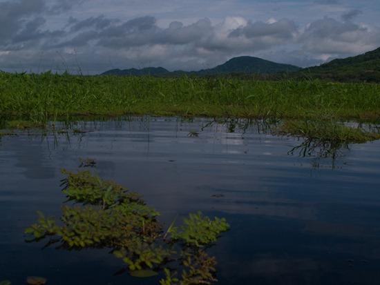 Wetland view - 06.15.2010 - 08.32.27