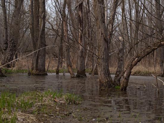Muscarella wetland - 04.02.2010 - 14.58.14