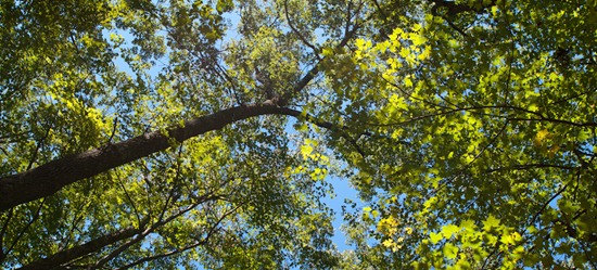 Camping at Zaleski State Forest - 09.05.2010 - 13.11.23_stitch