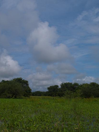 Lazaro Wetland - 07.07.2010 - 08.35.48