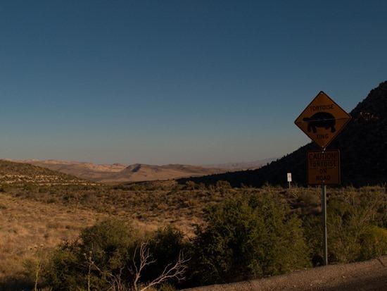 Warning Desert Tortoise - 05.03.2012 - 20.50.40