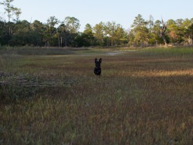 Skidaway Island State Park with Amos - 10.09.2012 - 14.45.20