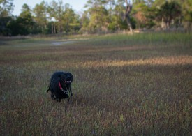 Skidaway Island State Park with Amos - 10.09.2012 - 14.45.28