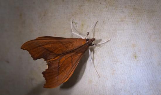Moth black light - 20130629 - 7