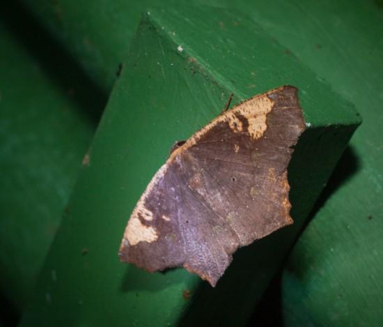 Moth black light - 20130629 - 8