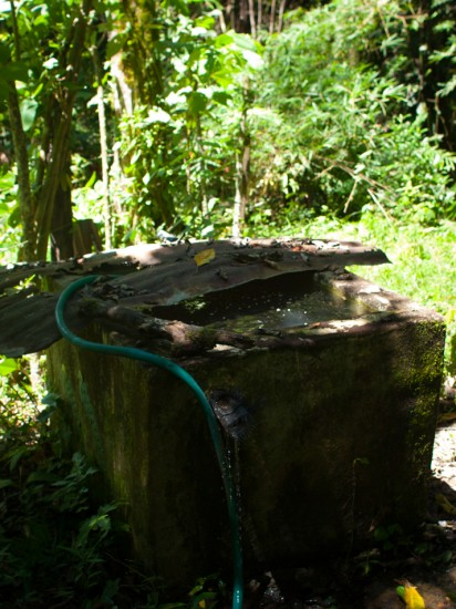 Tilapia pond - 20130617 - 1