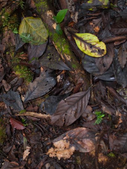Leaf Litter - 20130707 - 1