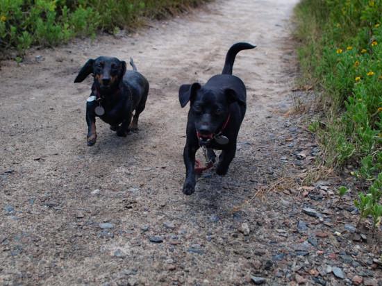Mud dogs - 06.15.2014 - 12.26.34