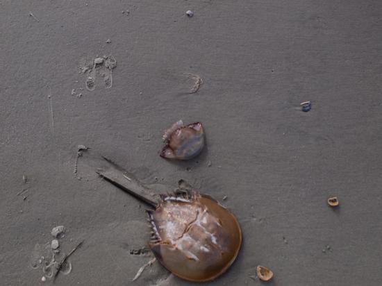 Ossabaw Island - Montemarano - 11.14.2014 - 14.08.51