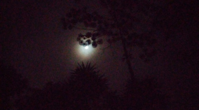 Night time Cercropia